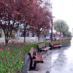 Bacău – orașul sufletului meu